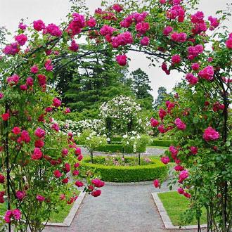 اهمیت رنگ بندی در ساخت داربست برای گل ها